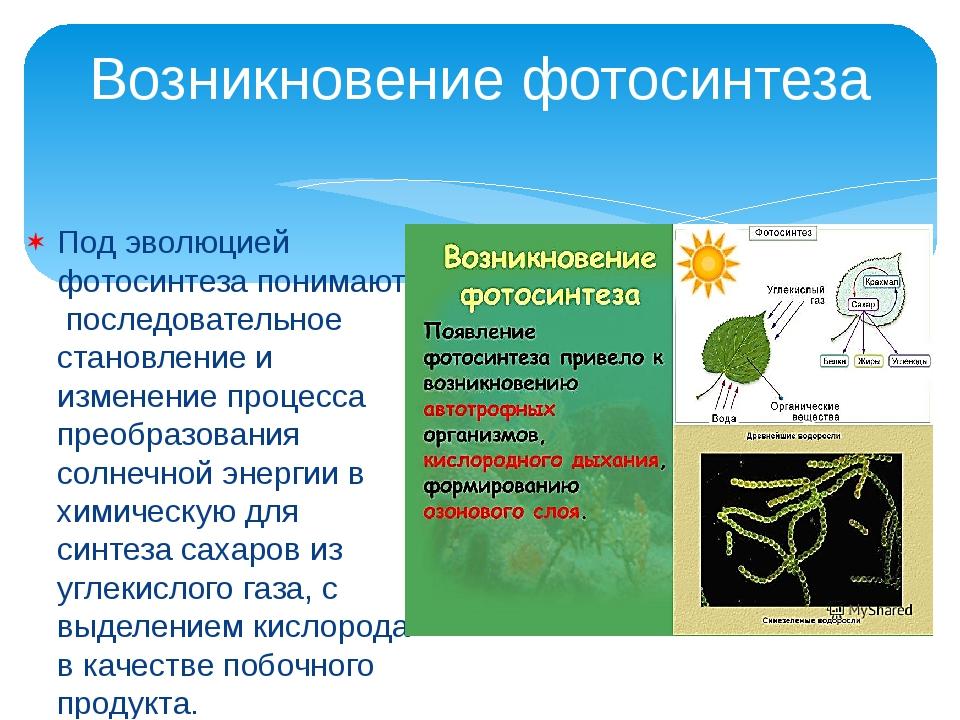 Под эволюцией фотосинтеза понимают последовательное становление и изменение п...