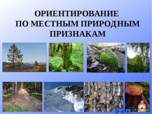У отдельно стоящих деревьев ветви с южной стороны обычно длиннее и гуще, чем