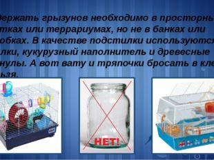 Содержать грызунов необходимо в просторных клетках или террариумах, но не в б