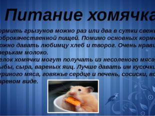 Питание хомячка Кормить грызунов можно раз или два в сутки свежей и доброкаче
