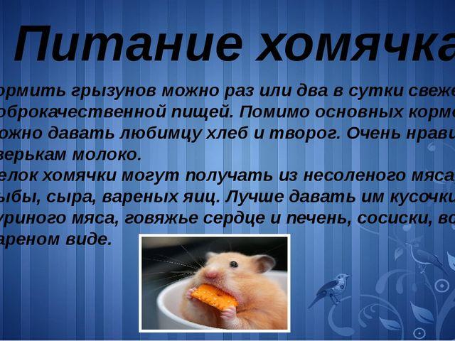 Питание хомячка Кормить грызунов можно раз или два в сутки свежей и доброкаче...