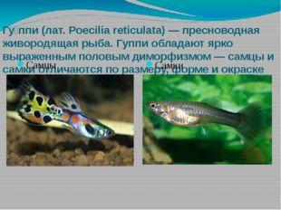 Гу́ппи (лат. Poecilia reticulata) — пресноводная живородящая рыба. Гуппи обла