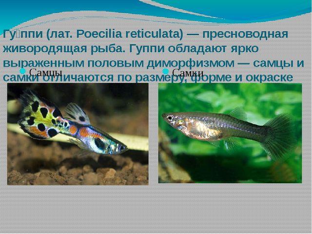 Гу́ппи (лат. Poecilia reticulata) — пресноводная живородящая рыба. Гуппи обла...