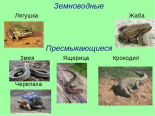 Земноводные Лягушка Жаба Пресмыкающиеся Змея Ящерица Крокодил Черепаха
