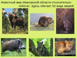 Животный мир Ивановской области относительно небогат. Здесь обитает 53 вида з