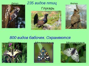Дятел 235 видов птиц Филин Глухарь 800 видов бабочек. Охраняются Махаон Медве
