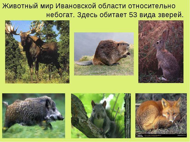 Животный мир Ивановской области относительно небогат. Здесь обитает 53 вида з...