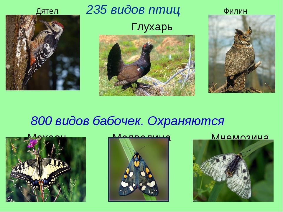 Дятел 235 видов птиц Филин Глухарь 800 видов бабочек. Охраняются Махаон Медве...