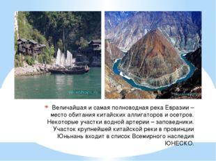 Величайшая и самая полноводная река Евразии – место обитания китайских аллига