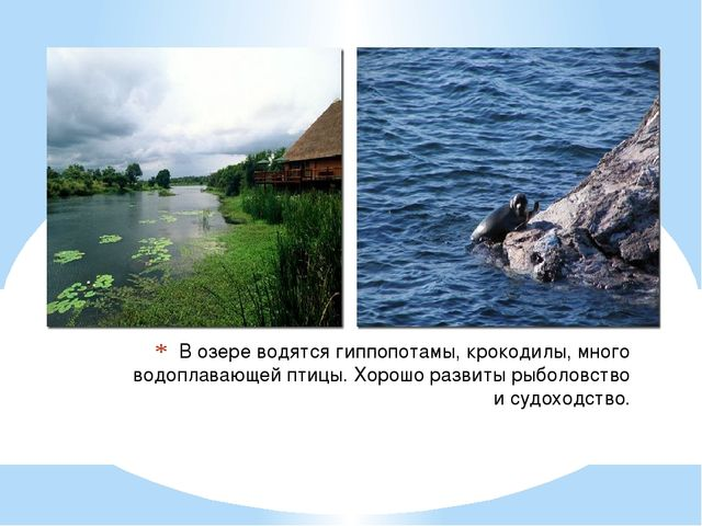 В озере водятся гиппопотамы, крокодилы, много водоплавающей птицы. Хорошо раз...