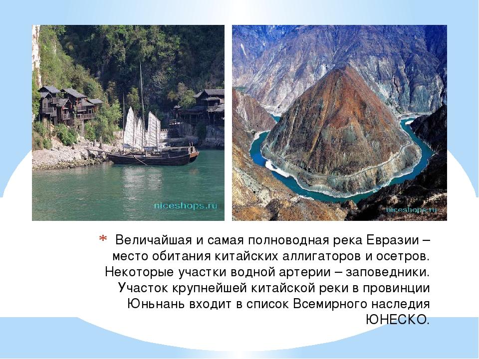 Величайшая и самая полноводная река Евразии – место обитания китайских аллига...