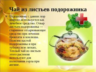 Чай из листьев подорожника Подорожник с давних пор широко используется как ле