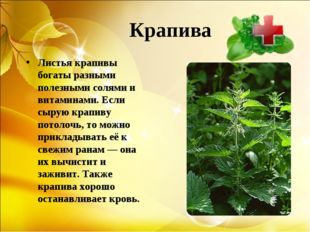 Крапива Листья крапивы богаты разными полезными солями и витаминами. Если сы