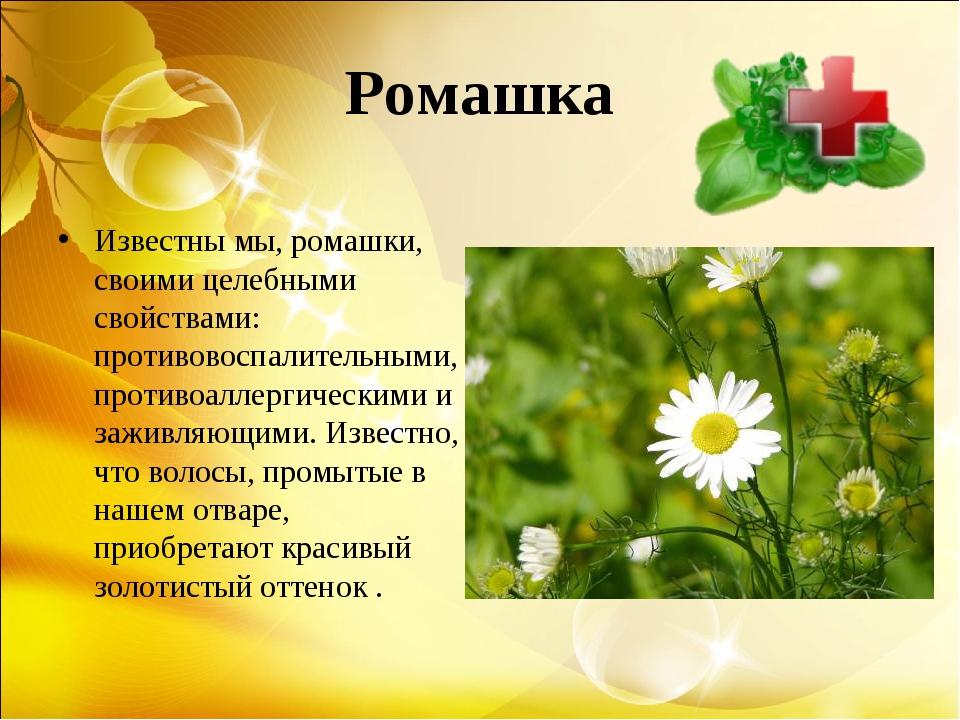 Ромашка Известны мы, ромашки, своими целебными свойствами: противовоспалитель...