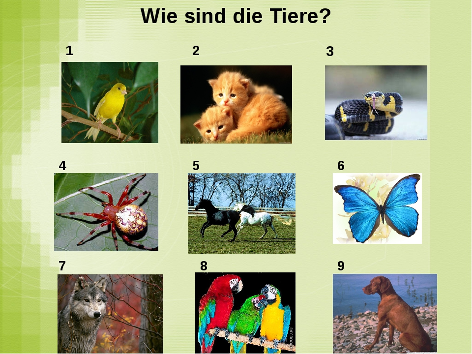 Wie sind die Tiere? 1 2 4 5 6 7 8 9 3