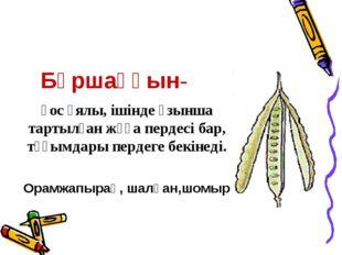 Бұршаққын- қос ұялы, ішінде ұзынша тартылған жұқа пердесі бар, тұқымдары перд
