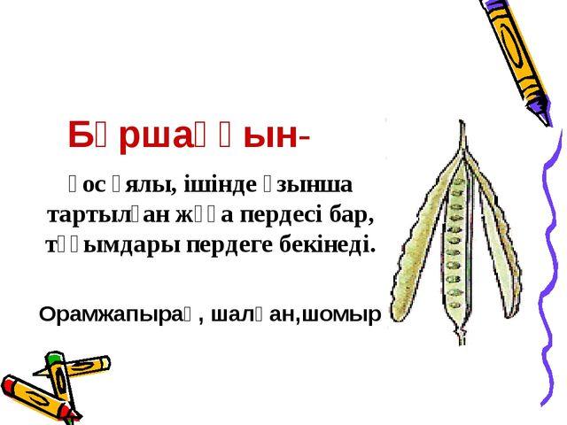 Бұршаққын- қос ұялы, ішінде ұзынша тартылған жұқа пердесі бар, тұқымдары перд...