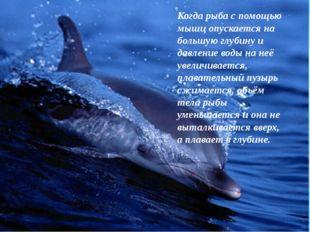 Когда рыба с помощью мышц опускается на большую глубину и давление воды на не