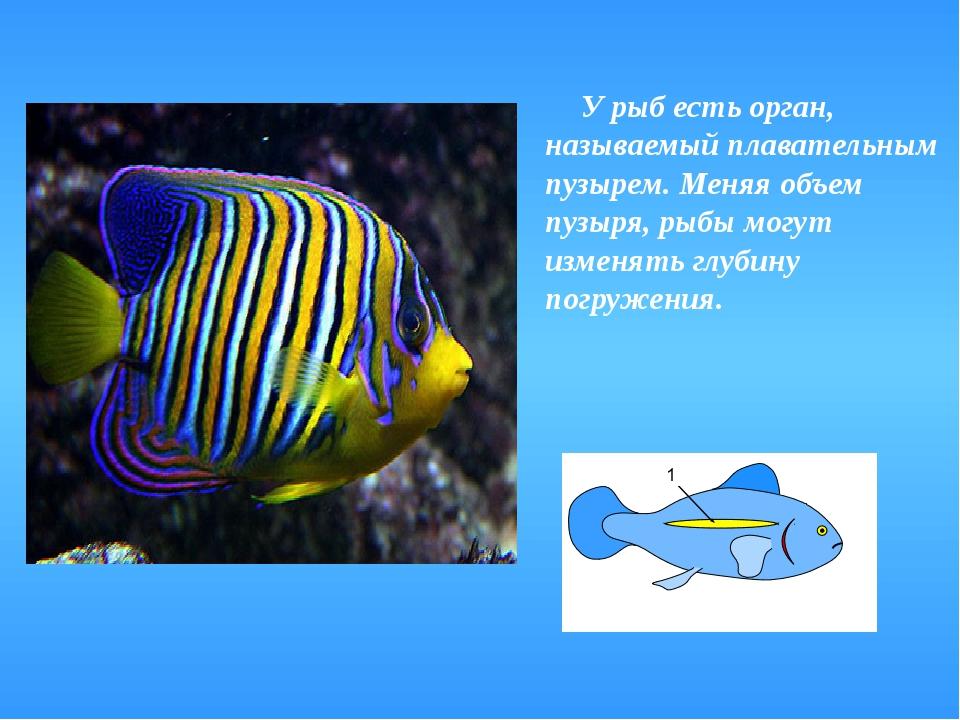 У рыб есть орган, называемый плавательным пузырем. Меняя объем пузыря, рыбы...