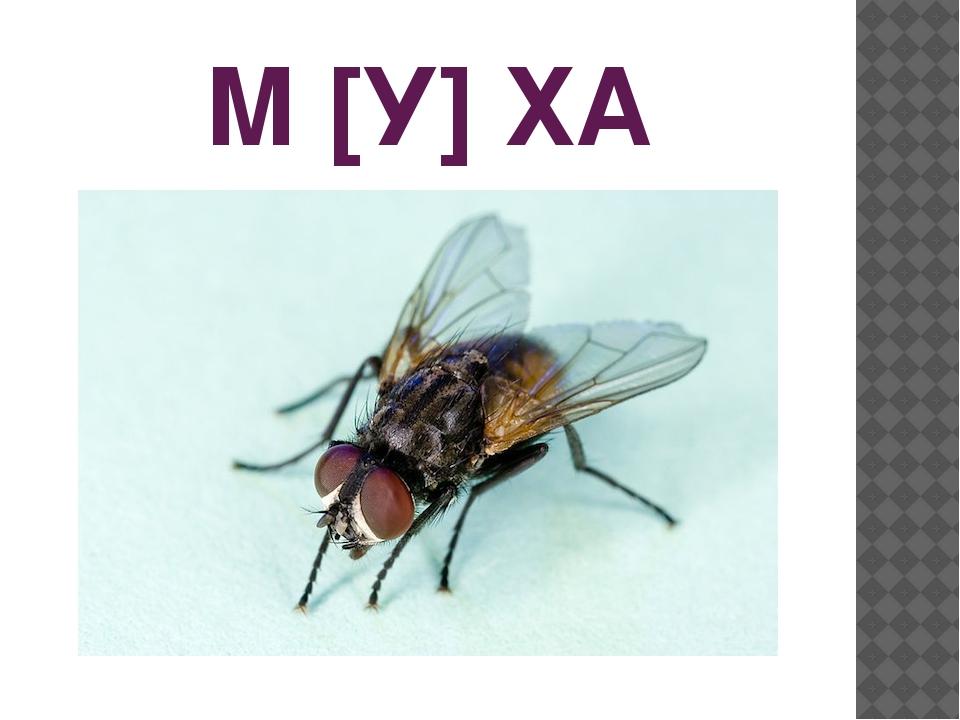 М [У] ХА