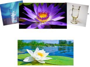 Воду пьют из кружек и стаканов, Из кувшинок также можно пить –