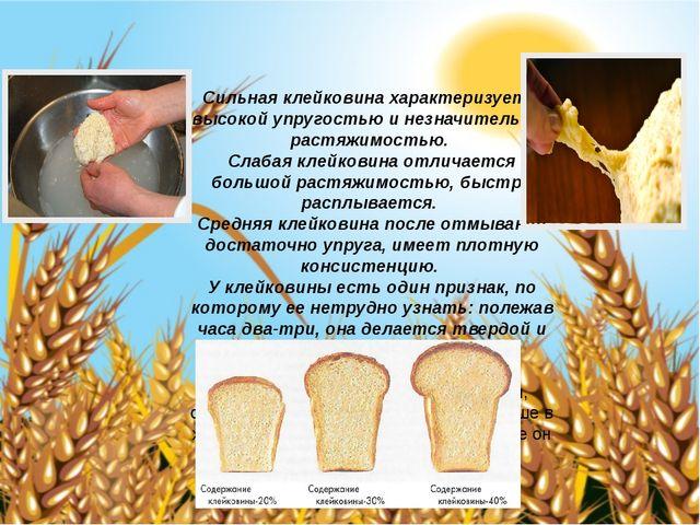 Сильная клейковина характеризуется высокой упругостью и незначительной растя...