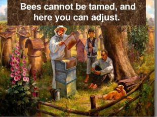 Bees cannot be tamed, and here you can adjust.