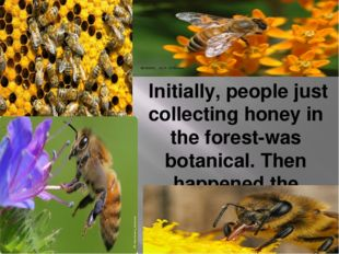 Initially, people just collecting honey in the forest-was botanical. Then ha