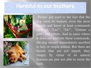 Harmful to our brothers People got used to the fact that the dog must be trai