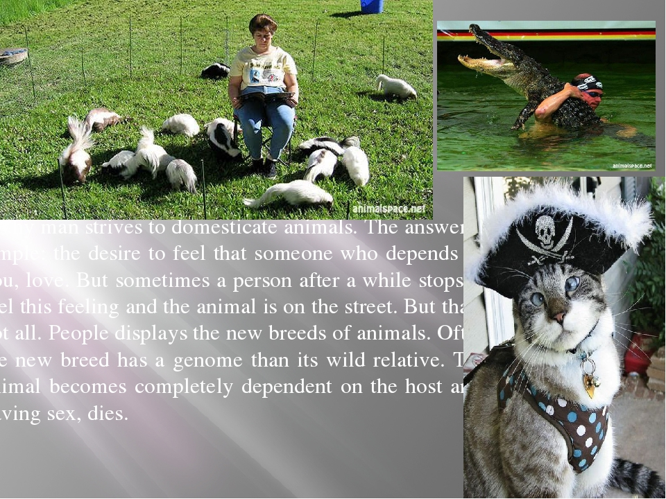 Why man strives to domesticate animals. The answer is simple: the desire to...