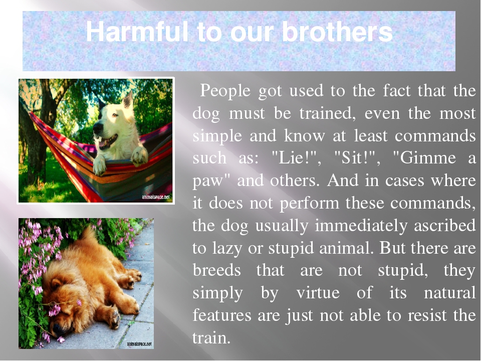 Harmful to our brothers People got used to the fact that the dog must be trai...