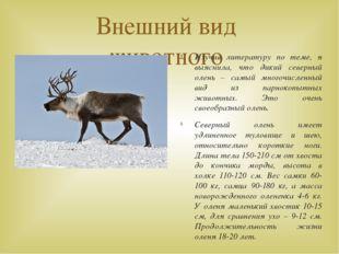Внешний вид животного Изучив литературу по теме, я выяснила, что дикий северн