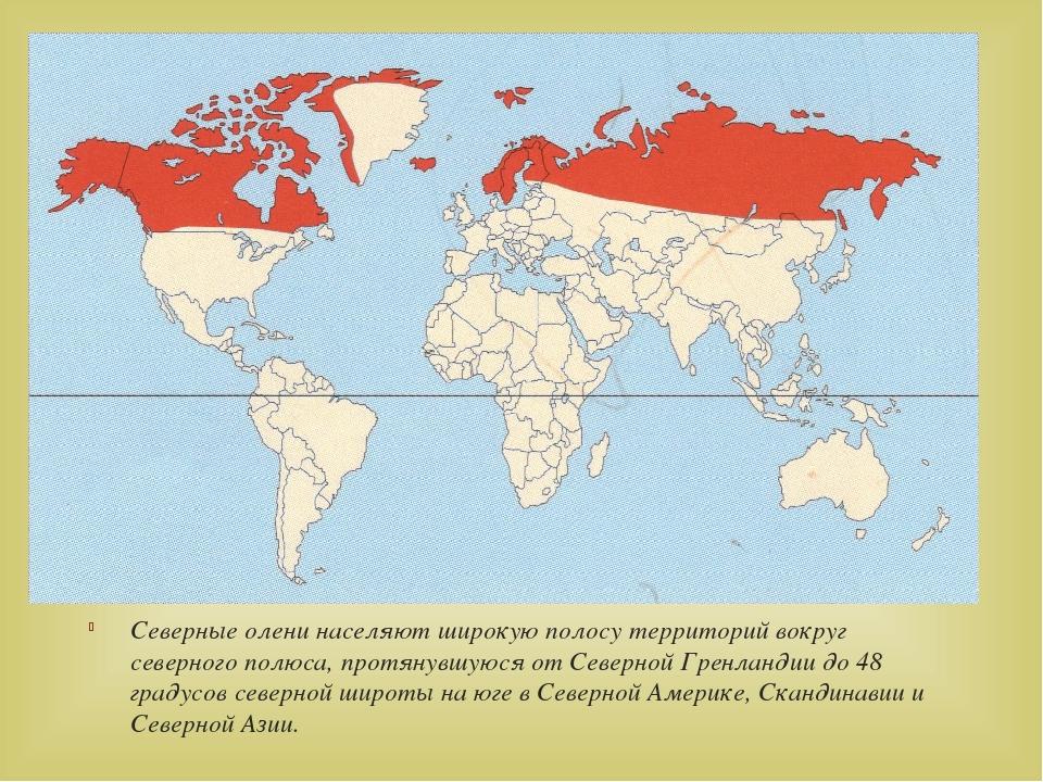 Северные олени населяют широкую полосу территорий вокруг северного полюса, п...