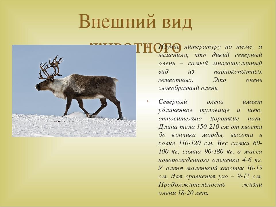 Внешний вид животного Изучив литературу по теме, я выяснила, что дикий северн...