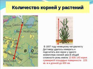 Москва С.-Петербург 600 км Рожь В 1937 году немецкому натуралисту Диттмеру уд