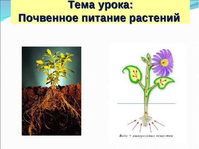 Тема урока: Почвенное питание растений