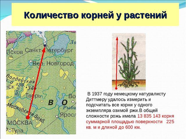 Москва С.-Петербург 600 км Рожь В 1937 году немецкому натуралисту Диттмеру уд...