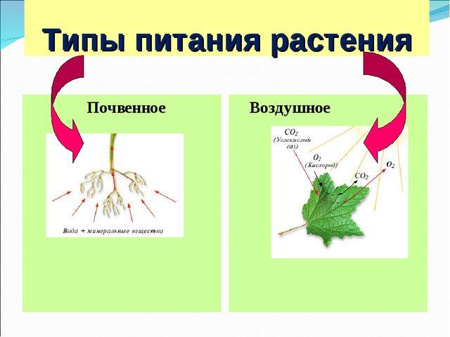 Типы питания растения Почвенное Воздушное