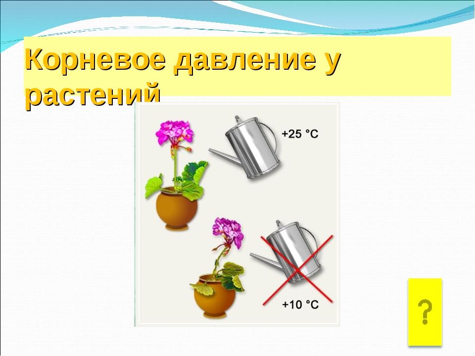 Корневое давление у растений
