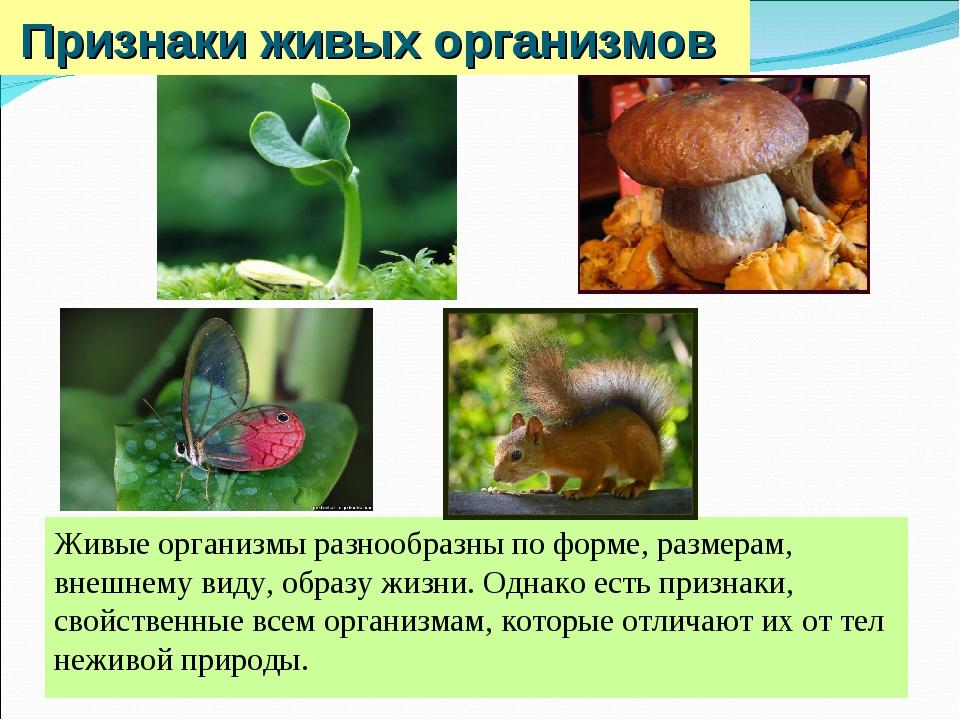 Признаки живых организмов Живые организмы разнообразны по форме, размерам, вн...