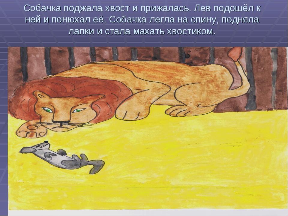 Собачка поджала хвост и прижалась. Лев подошёл к ней и понюхал её. Собачка ле...