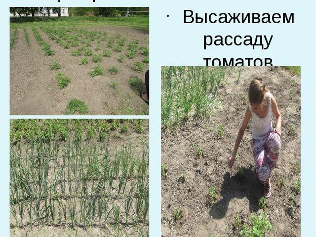 Май. ОВОЩНОЙ ОТДЕЛ Картофель и лук Высаживаем рассаду томатов