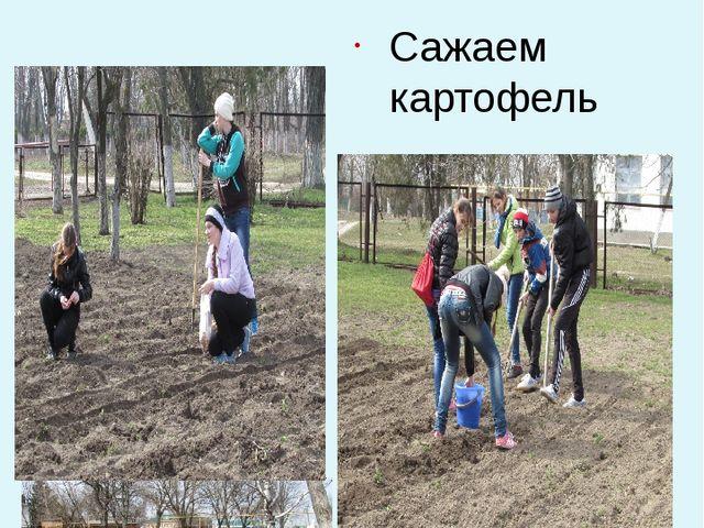 Начинаем посадку семян растений. Сажаем лук к Сажаем картофель