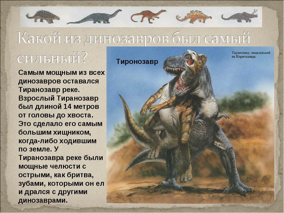 Самым мощным из всех динозавров оставался Тиранозавр реке. Взрослый Тиранозав...