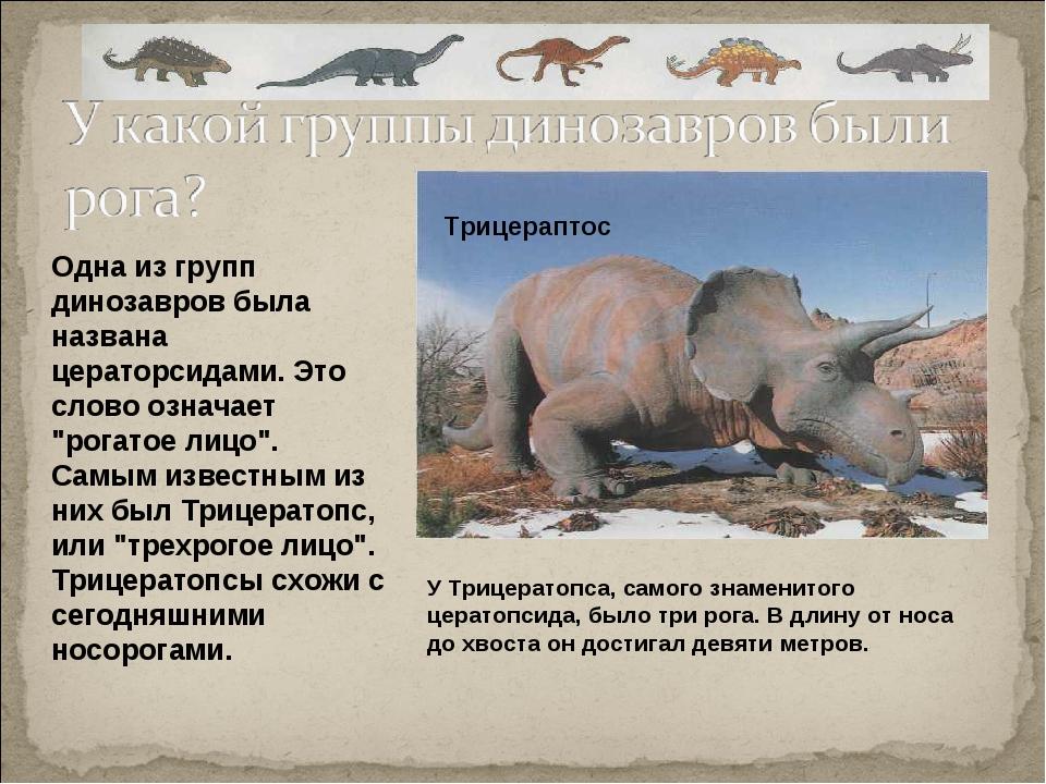 """Одна из групп динозавров была названа цераторсидами. Это слово означает """"рога..."""