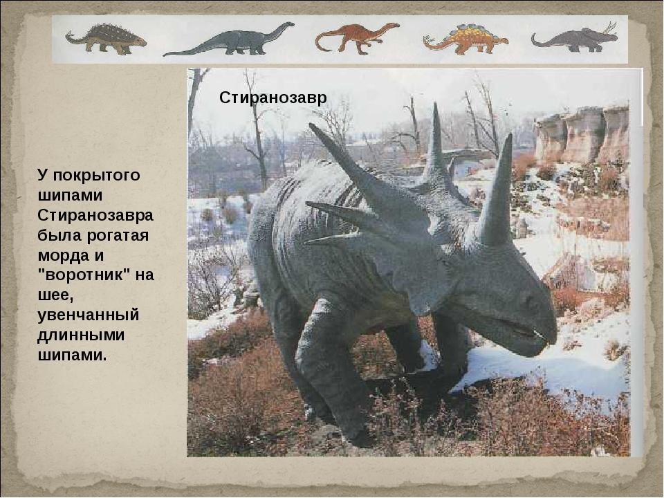 """У покрытого шипами Стиранозавра была рогатая морда и """"воротник"""" на шее, увенч..."""