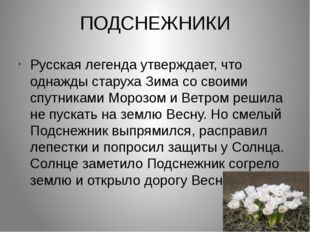 ПОДСНЕЖНИКИ Русская легенда утверждает, что однажды старуха Зима со своими сп