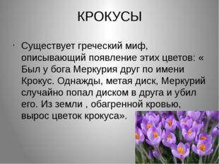 КРОКУСЫ Существует греческий миф, описывающий появление этих цветов: « Был у
