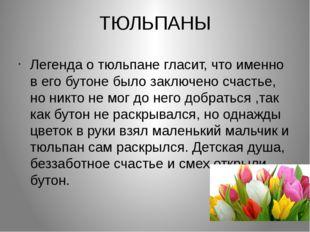 ТЮЛЬПАНЫ Легенда о тюльпане гласит, что именно в его бутоне было заключено сч