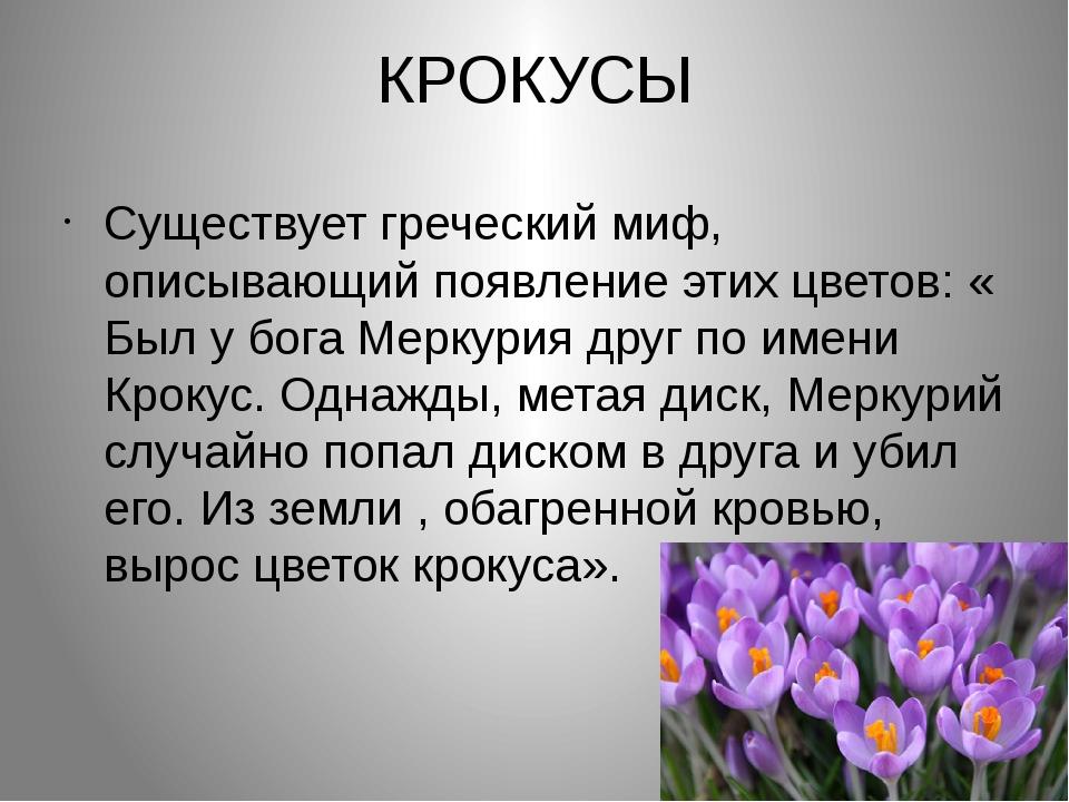 КРОКУСЫ Существует греческий миф, описывающий появление этих цветов: « Был у...
